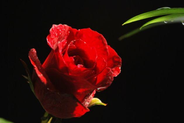 Pure Romance Invitations Ideas